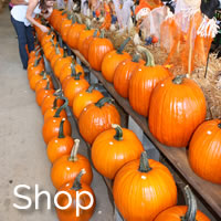 Things to do in South Carolina - Pee Dee Country Shopping